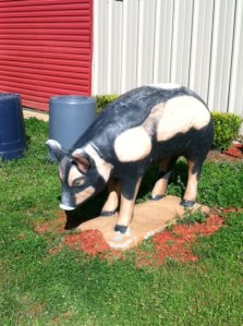 All Hail The Pig